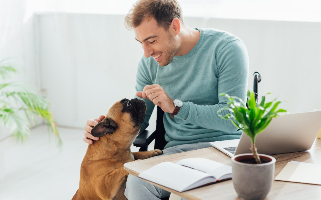 Online Dog Training: What Trainers Need to Know To Take Their Business Virtual