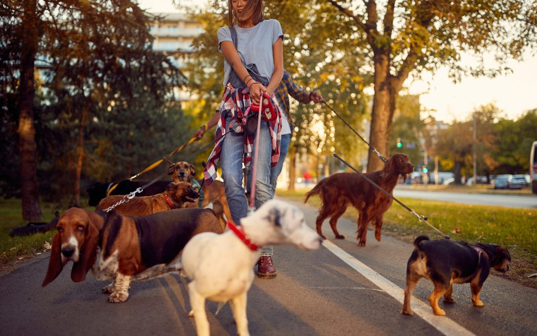 Here's How Even A Busy Dog Trainer Can Get Back Free Time